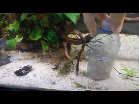 Aquarium Vaccum DIY (syphon)