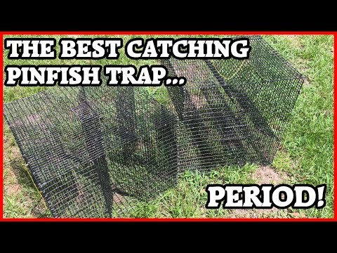 How to catch Pinfish - Pinfish Trap (Oversized Clover)