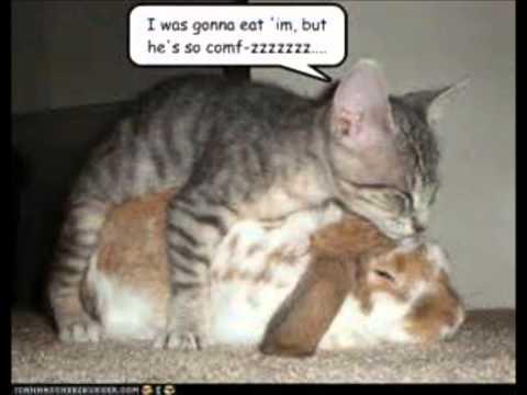 Awsome animals!