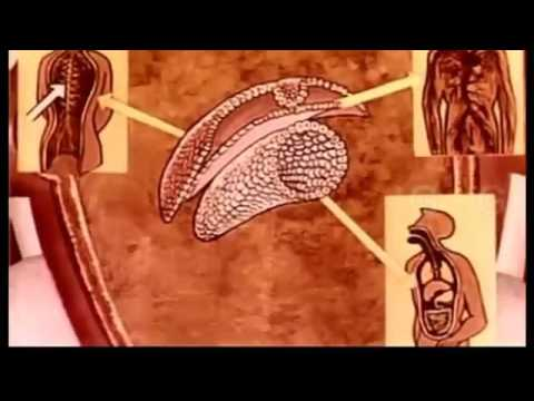 Pregnancy   Sex Education Hindi Movie