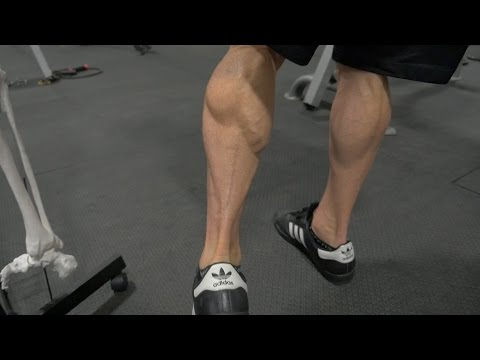 How-To Build Big Calves  |  Best Gastrocnemius and Soleus Exercises  |  Advanced Training #24
