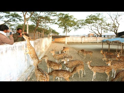 Starting a Business - Deer Farm Business Plan and How to Start Axis Deer Farming