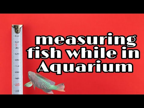 3 ways to measure fish while in the aquarium