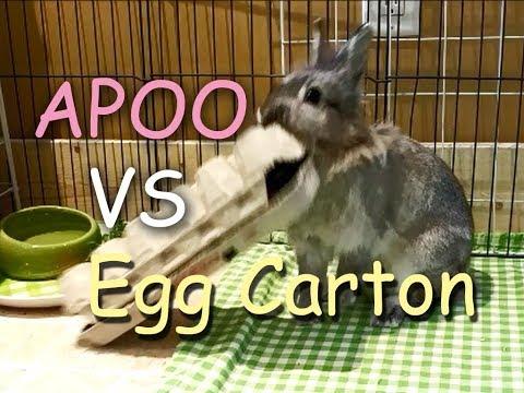 Apoo the Bunny VS Egg Carton