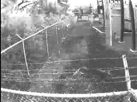 34   Fence Squirrel