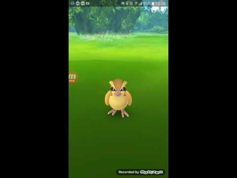 Nova técnica para capturar Pokémon no Pokémon go