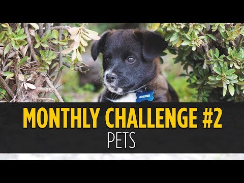 Pets Photo Challenge