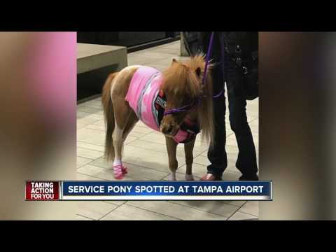 When horses fly: pony rides Southwest Airlines
