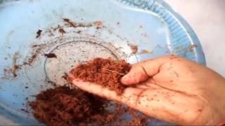 How to make Coco-peat At Home / Gardening tips & tricks // Mammal Bonsai ( Hindi)