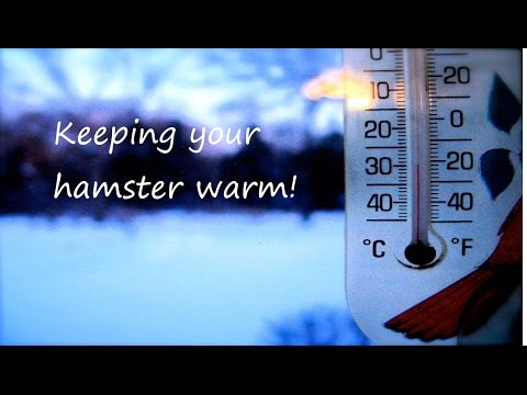 Keeping your hamster warm!