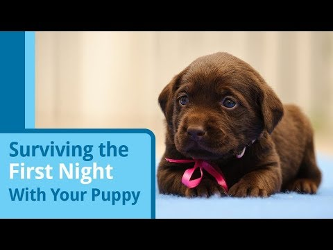 Surviving Your Puppy's First Night at Home