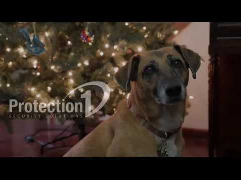 Pet-Proof Your Christmas Tree