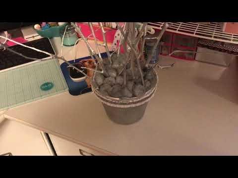 DIY Money Tree