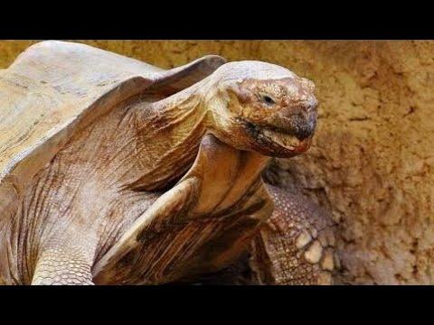 10 Animals In Danger Of Becoming Extinct Films 2017