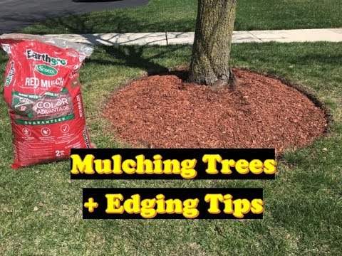 How to Mulch Around Trees | Mulch by Trees (LAWN CARE + CURB APPEAL)