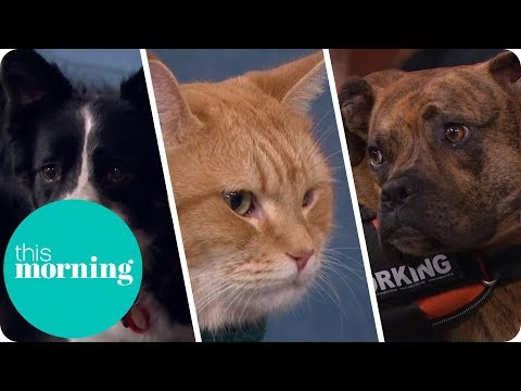 Life-Changing Pets | This Morning