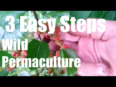 How To Create A WILD Permaculture Food Forest - 3 Easy Steps !!!