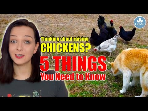 5 Things to Know Before You Buy Chickens