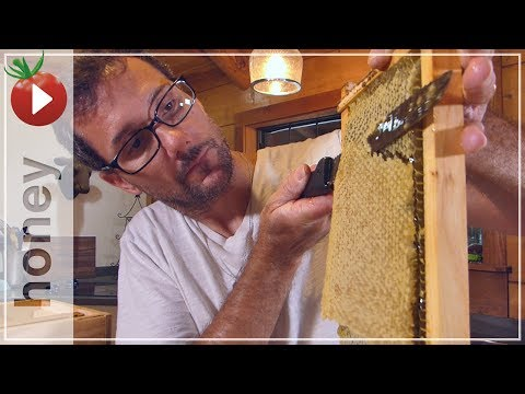 Honey Harvest - Spinning Out 4 Gallons of Honey!