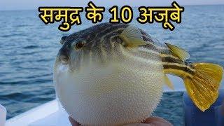 समुद्र के १० विचित्र और भयानक मछलियां 10 Creepy Sea Fishes You Didn