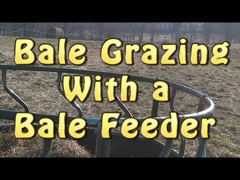 Bale Grazing With A Bale Feeder
