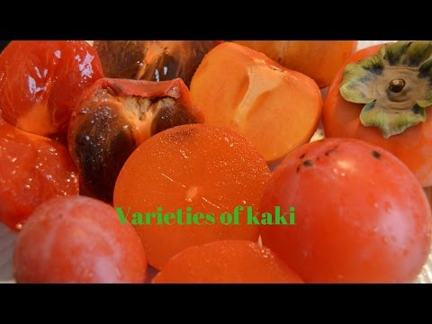 Varieties of kaki / persimmons