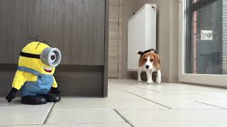 MINION SURPRISE : Funny Dog Reactions!