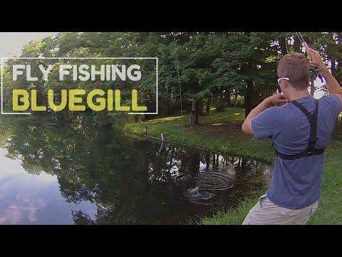 Fly Fishing Pond Bluegill -- CHEAP ROD