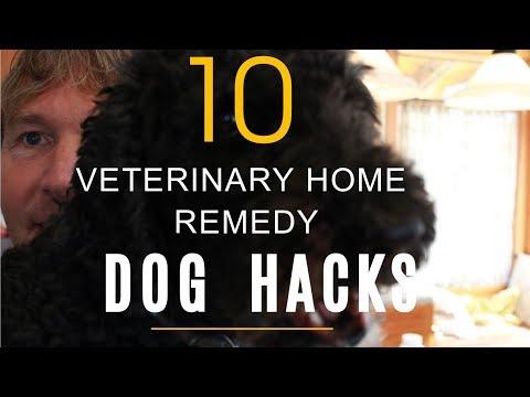 Top 10 Veterinary Dog Hacks