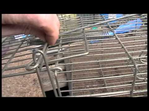 Whole Family Rat Cage Trap