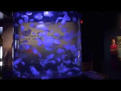 Jelly Fish Tank Gorgeous Cylinder Tank