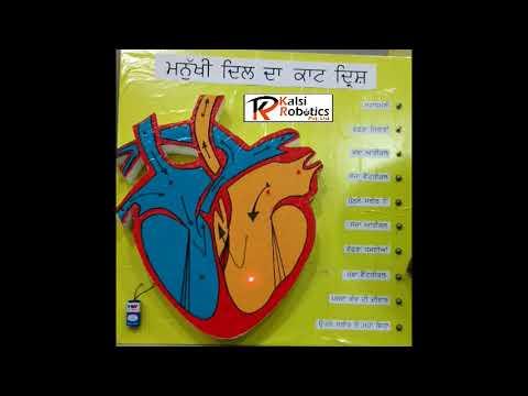 how to make Human Heart Working Model kalsi robotics pvt ltd