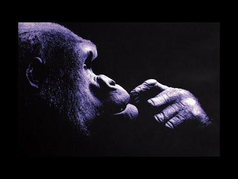 Purple Gorilla - Multi Layer Stencil Art