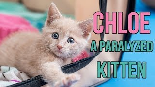 rescuing chloe a paralyzed kitten