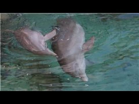 All About Dolphins : How Dolphins Live