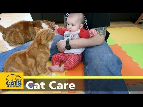 Cats and kids: dos and don'ts - Cats Protection's Kids and Kitties