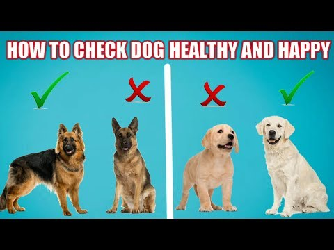 How to Check Your Dog Healthy Or Not | In Hindi | how to check your dog good health