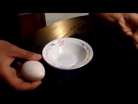 On the farm: checking for egg fertility