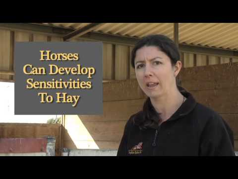 How To: Treatment Options for Equine Diarrhea