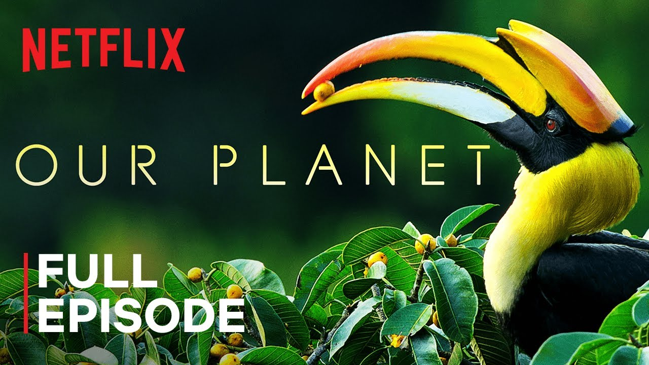 Our Planet   Forests   FULL EPISODE   Netflix