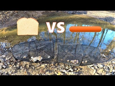 BEST Minnow Trap Bait - BREAD vs HOT DOG (which catches more?)