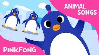 The Penguin Dance   Animal Songs   PINKFONG Songs for Children