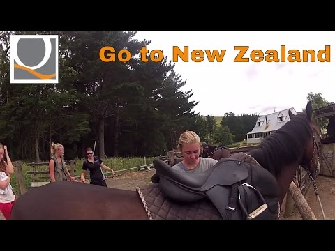 Job in  New Zealand