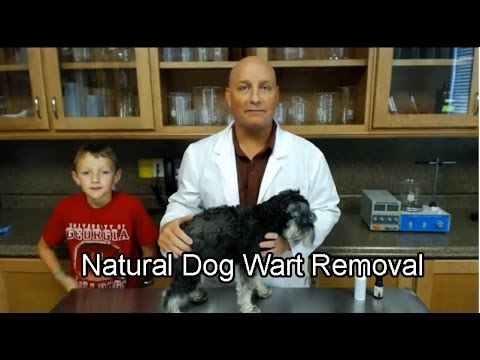 Painless Dog Wart Removal | Easy and Painless Dog Warts Removal in The Privacy of Your Home