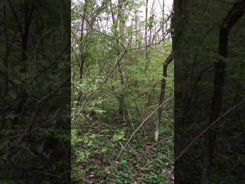 Ohio arrowhead hunting and Ohio mushroom