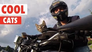 Cool Cats Compilation