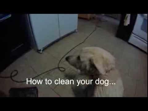how to dry clean your dog