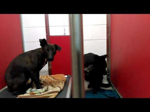 Raisin & Evita - Adoptable Doggies at Pima Animal Care Center on 3-15-18