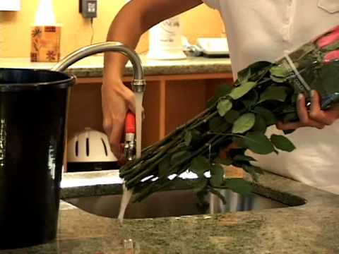 How to Care for Fresh Flowers: Flower Handling Tips to make Roses last longer.