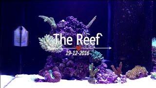 Aqua Reef 395 (2016)